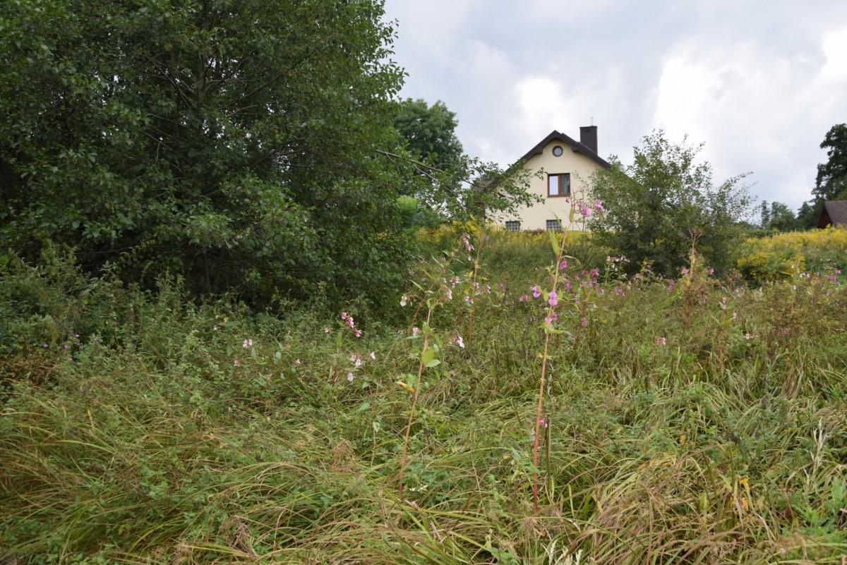 Dąbrówka-Sowice